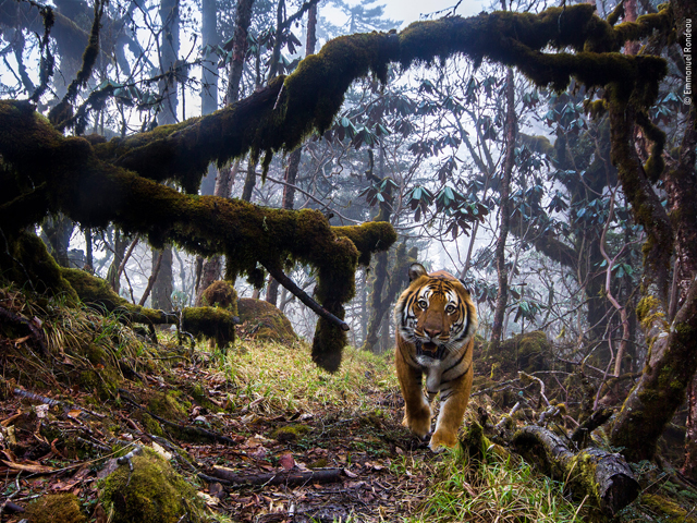 54th Wildlife Photographer of the Year