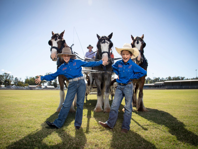 Scenic Rim Clydesdale Spectacular