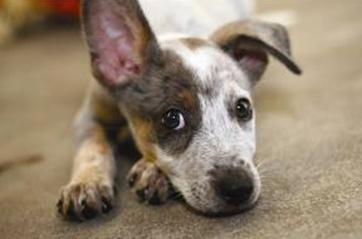 Adopt a Pet for Valentine's Day