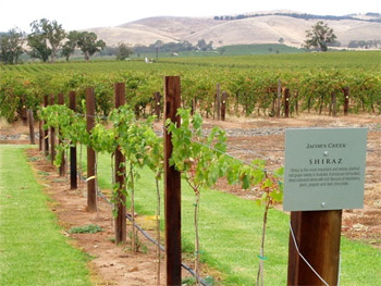 Wine Tasting in the Barossa Valley