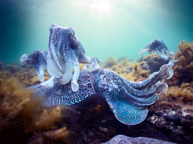 Blue Planet II Live In Concert Australia