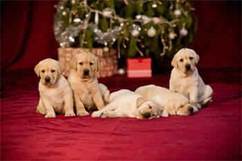 The Bow Project by Guide Dogs Victoria
