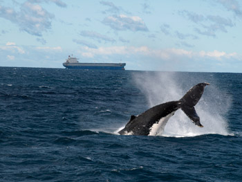 Newcastle: Hotspot for Winter Whale Watching