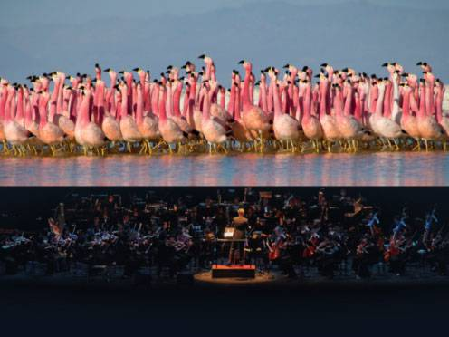 Planet Earth II Live in Concert Review