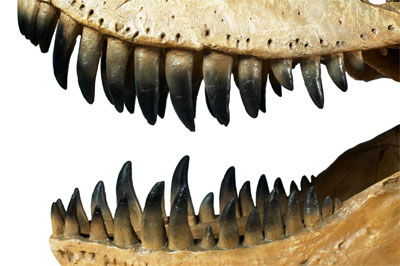Dinosaurs take over Melbourne Museum these school holidays!