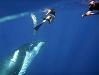 Sunreef Mooloolaba Launches Swimming With Humpback Whales