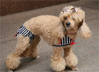 Best Dressed Pets Summer Couture