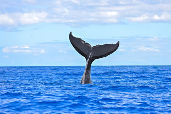 6 Whale Watching Hot Spots